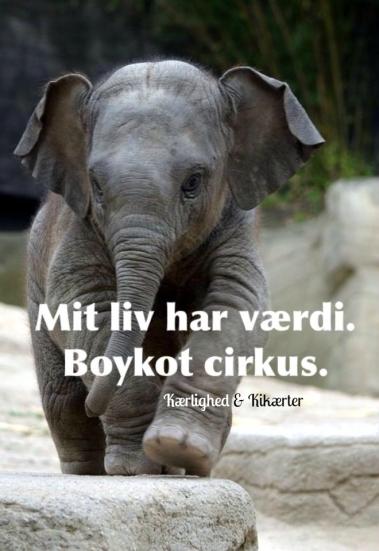 elefant-meme