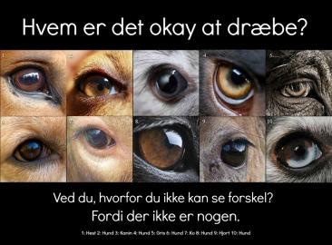 """Hvem er det okay at dræbe? Der er ingen afgørende forskel på disse dyr, der gør, at det er okay at dræbe eller mishandle det ene, men ikke det andet. Alle dyr er bevidste, sansende individer med evnen til at føle glæde og smerte. Hvis du mener, at denne sætning er vanvid: """"Det er fint nok, hvis du ikke har lyst til at dræbe og spise hunde, men hvis jeg har lyst til at dræbe og spise hunde, så skal du ikke blande dig i det."""" Så bør du også acceptere, at denne sætning er det: """"Det er fint nok, hvis du ikke har lyst til at dræbe og spise grise, men hvis jeg har lyst til at dræbe og spise grise, så skal du ikke blande dig i det."""" Vær med til at stoppe dyremishandlingen ved at stoppe din egen deltagelse i den. Udfas din brug af animalske produkter, og uddan dig selv om konsekvenserne ved at bruge og misbruge dyr som produkter."""