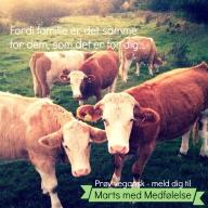Familie er ikke kun et fænomen blandt mennesker. Andre dyrearter værdsætter deres familie og venner præcis ligesom du gør.