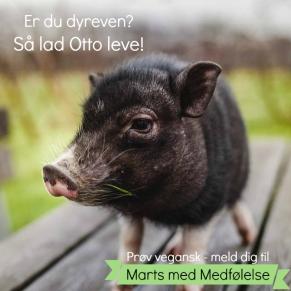 I december blev Otto centrum for en syg leg på DR3, hvor han skulle repræsentere flæskestegen, som de fleste danskere spiser til jul. Otto endte med at få lov at leve, og han inspirerede en del til at droppe flæskestegen, fordi de så ham for det individ, han er. Lad Otto leve - deltag i Marts med Medfølelse.